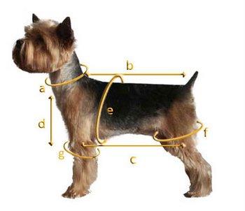 Jak mierzymy psa